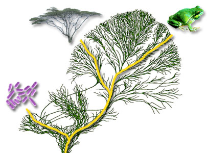 All organisms are related by the passage of genes along the branches of the Tree of Life